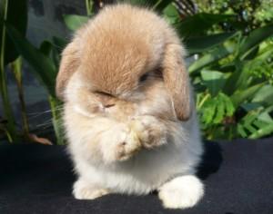 rabbit-19